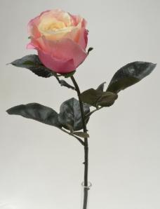 Seidenrosen creme-pink Ø7cm 6Stk