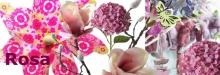 Farbthema-rosa