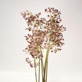 Efeufruchtstand rosa  75 cm (1St)