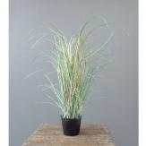 Gras - Grasbusch gefrostet im Topf 60cm 1Stk