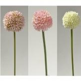 Allium in drei Farben 38cm 6Stk