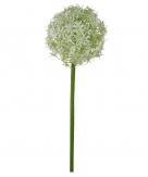 Allium weiß 76cm  1Stk