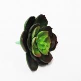 Echeverie grün 7cm 6Stk