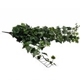 Efeuhänger / Efeubusch  grün/weiß 86cm 1Stk