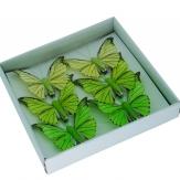 Feder-Schmetterlinge grün sortiert 7,5 cm 6Stk