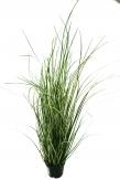 Gras im Topf  - 60cm 1Stk