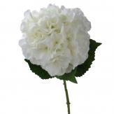 Hortensienzweig creme-weiß 63cm 1Stk