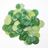 Lotusblätter grün Ø2-3cm 120Stk