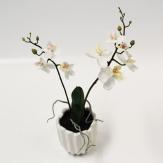 Orchidee weiß im Topf 26cm 1Stk