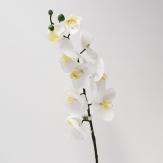 Phalaenopsis weiss 9 Blüten, 3 Knospen 76cm 1Stk