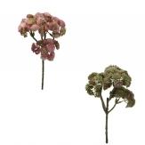 Sedumzweige in zwei Farben 30cm 3Stk