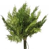 Wacholder Zweige im Bund 30cm 9Stk